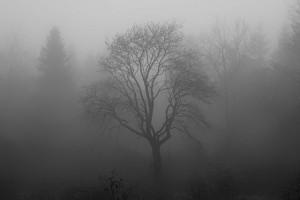 tree-1031814_640